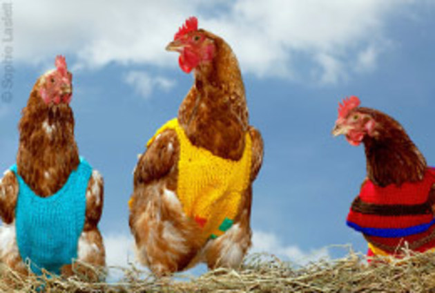 Today FM - Pauline McLynne is knitting jackets for hens!